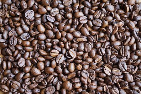 café, grains de café, grains de, frais, arôme, la variété de café, café grain