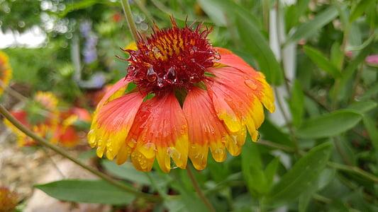 Bloom, květ, okvětní lístek, jaro, květ, Příroda, květinové