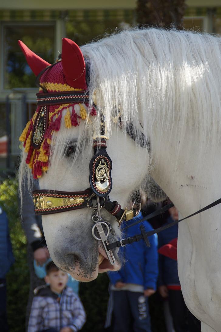 cavall, decorades, animal, passeig, processó, processó eqüestre, tancar