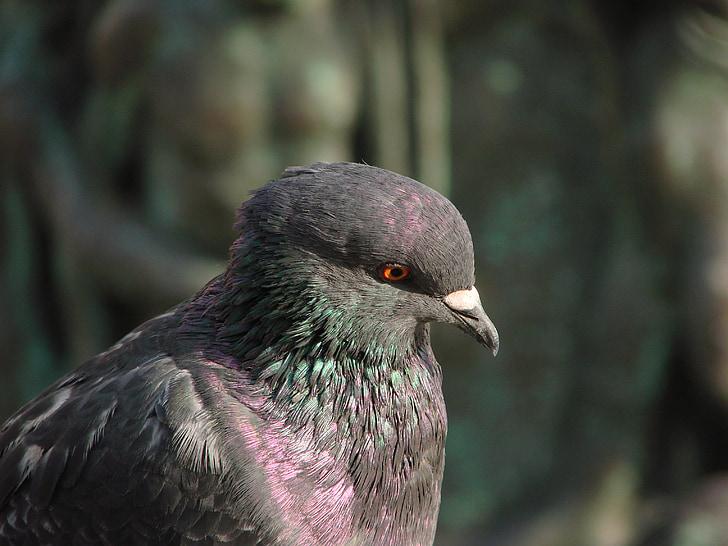dove, pigeons, wing, standing, animal, bird pigeon, bird