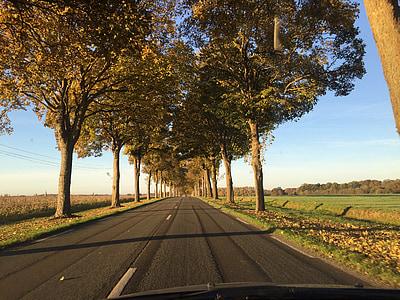 road, path, tree, summer, field, landscape, fields