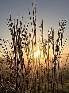gramínies, Alba, natura, morgenstimmung, herba, cel, romàntic
