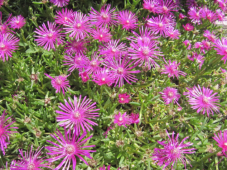 flors, fons, primavera, colors, Frisch