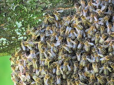 abelles, rusc, insecte, natura, l'estiu, volar, l'apicultura