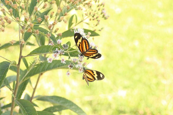 papallones, vida animal, salut