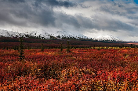 landscape, autumn, mountains, snow, nature, wilderness, outdoors