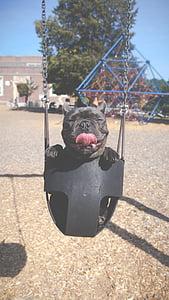 canvi de pneumàtics, Gronxador, parc infantil, diversió, gos, cadell, llengua