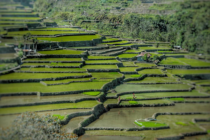 agriculture, asia, landscape, nature, rice fields, rice terraces, terraced Field