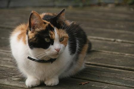 cat, cats, sweet, garden, animal, nice, pet