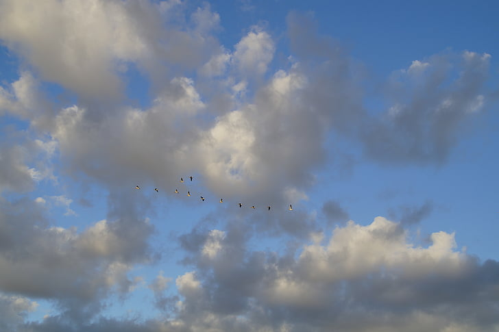 clouds, sky, bird flight, geese, migratory birds