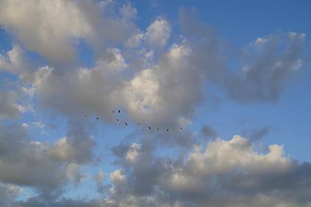 облаците, небе, Птичият полет, гъски, прелетни птици