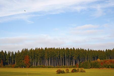 Las Krajobraz, lasu, las sosnowy, pole, Natura, jesień, kolory jesieni