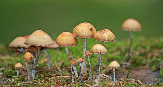 mushrooms, forest, autumn, nature, plant, moss, green