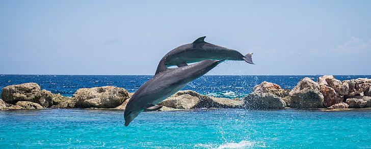 Дельфины, Аквариум, прыжки, Рыба, животное, океан, воды