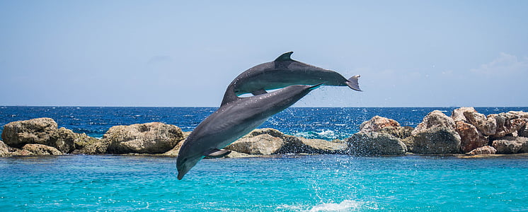 dolphins, aquarium, jumping, fish, animal, ocean, water