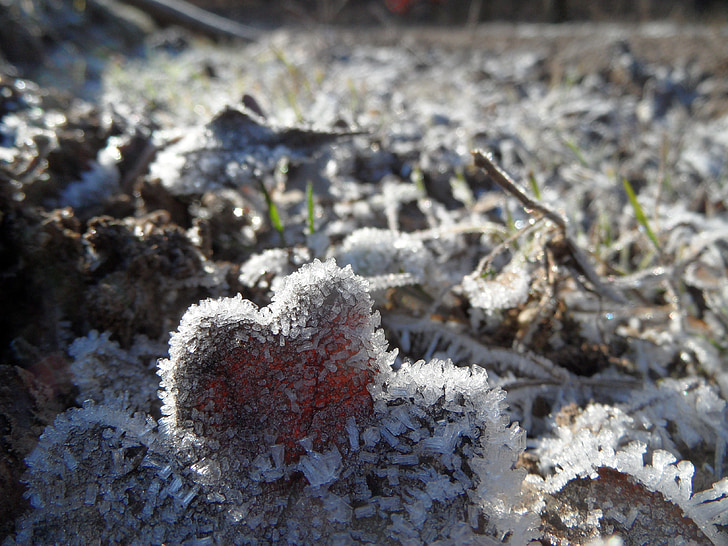 ice, frost, winter, nature, cold, frosty, frozen