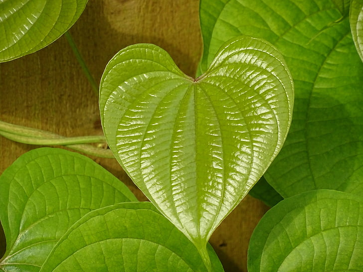 fulla, verd, cor, fulla verda, natura, disseny