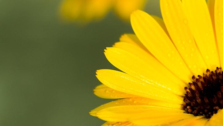 cvijet izbliza, Nevena, Žuti cvijet