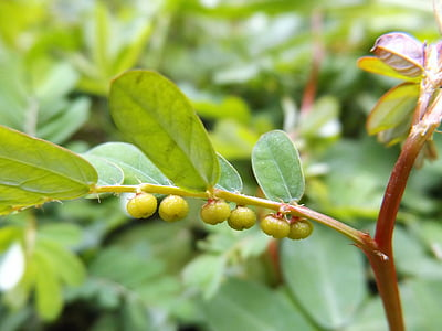 small, fruit, garden