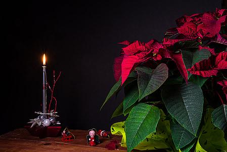 jul, stearinlys, flamme, lys, stadig liv, vokslys, dekoration