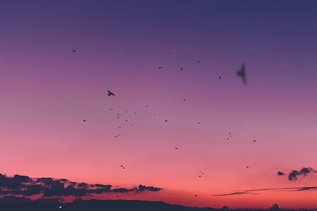 sunset, sky, cloud, birds, flying, animal, bird