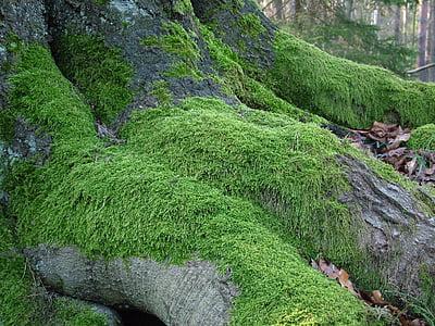 tree, root, moss, nature, green