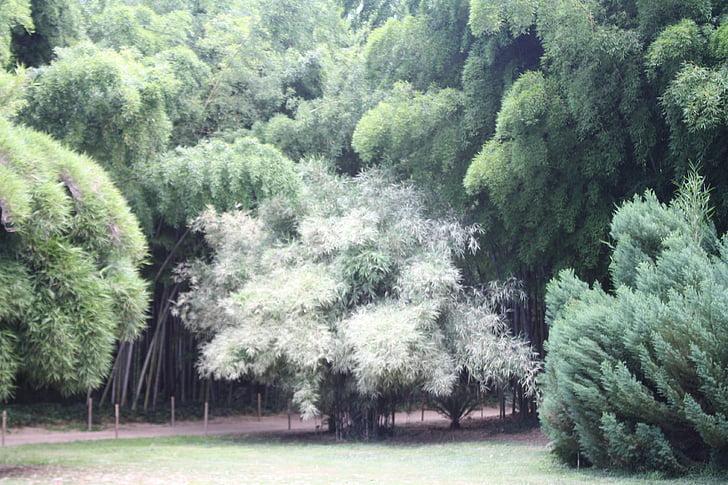 bamboe, Ardèche, plant, botanische tuin
