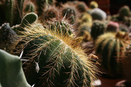 fat plants, plants, cactus, plants with needles, prickly plants