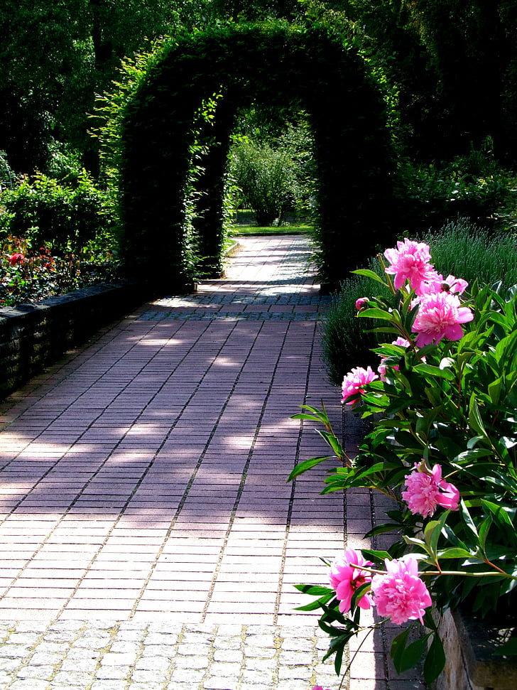 flowers, archway, green archway, peony, away, park, flowers at away