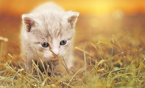 pisica, drăguţ, pisica baby, pisoi, animal de casă, animale, fermecător