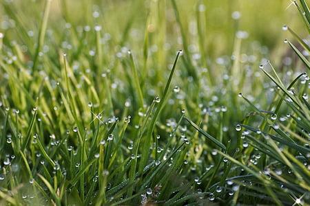 naturlig, landskapet, morgen, morgen dugg, vann, dråpe vann, anlegget