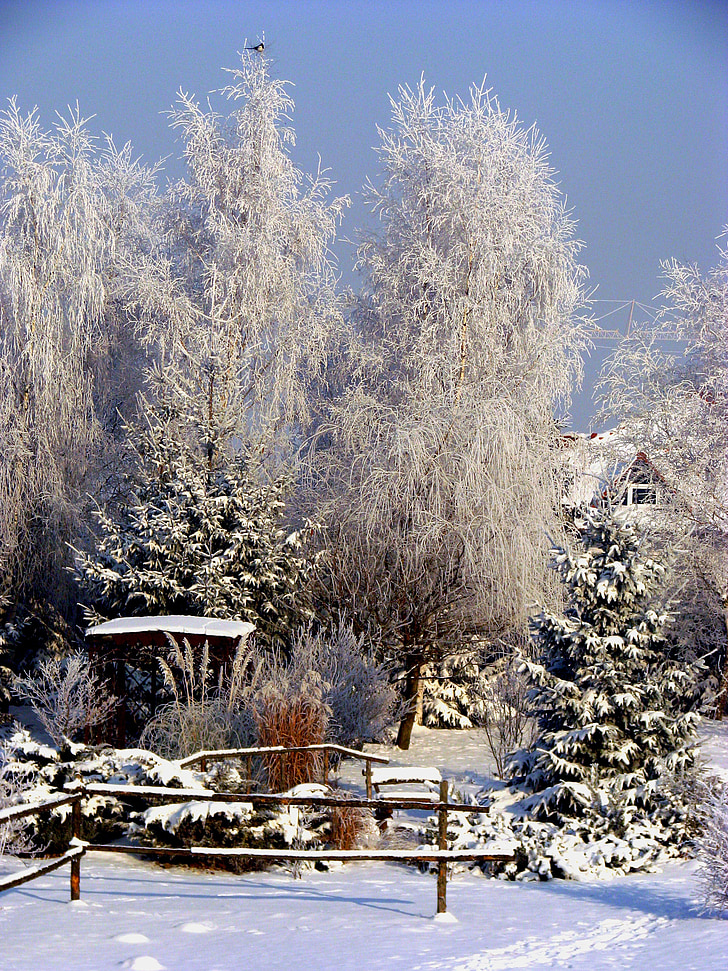 winter, village, garden terrace, frost, snow, nature, tree