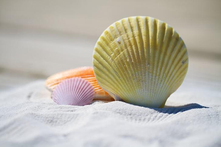 пляж, Природа, пісок, берег моря, Приморський, оболонок, тварина оболонки