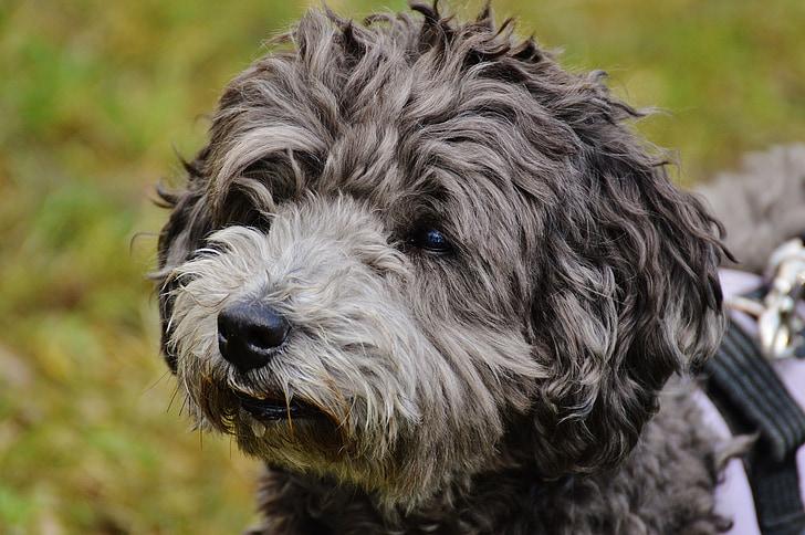 dog, fur, pet, animal, wuschelig, animal fur, animal world