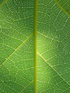 yaprak, bitki arka plan, etkileri, arka plan, doku, Bitki mimarisi, doğal doku