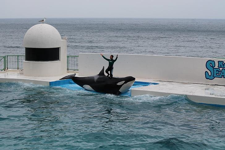 SeaWorld, акваріум, Вбивця китів, водні, продуктивність