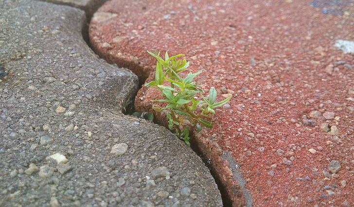 vida, determinació, maons, perseverança, natura, verd, passarel·la