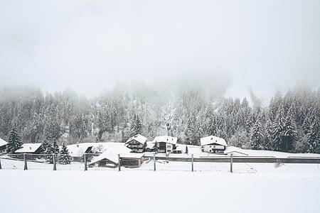 fred, boira, bosc, cases, boira, petit poble, neu