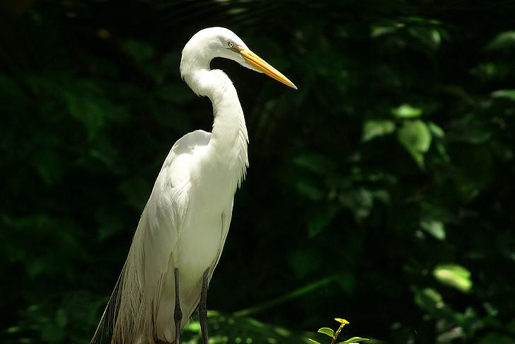 heron, bird, environment, nature, wildlife, animal, egret