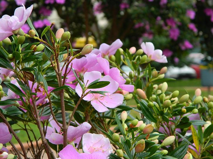 květiny, zahrada, zahradnictví, květ