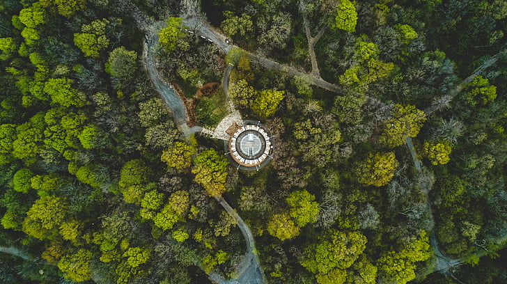 aerial view, forest, growth, nature, road, trees, woods
