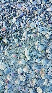 petxines, conquilles, Mar, oceà, natura, Marina, closca