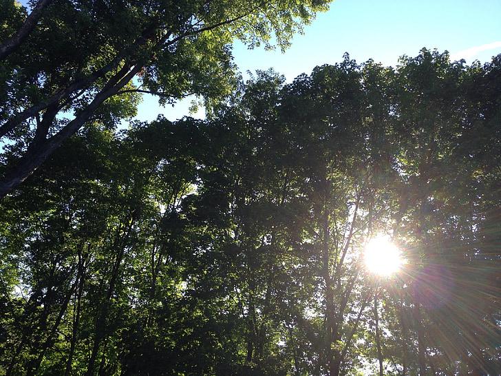 svetlo, liečenie, Sky, stromy, Príroda, prírodné, Divine