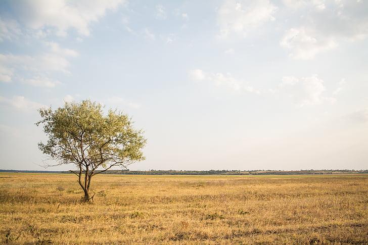 paisatge, granja, camps, herba, pastures, horitzó, Prat