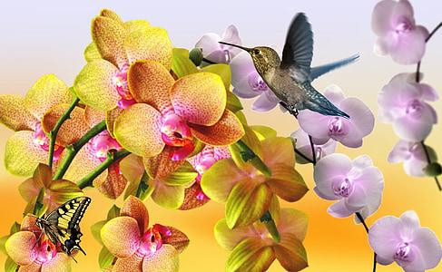 kollane orhidee, lilla orhidee, Orchid ühendatud, valge orhidee, loodus, kevadel, Aed