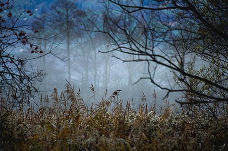 forest, fog, mood, morning, autumn, atmosphere, landscape