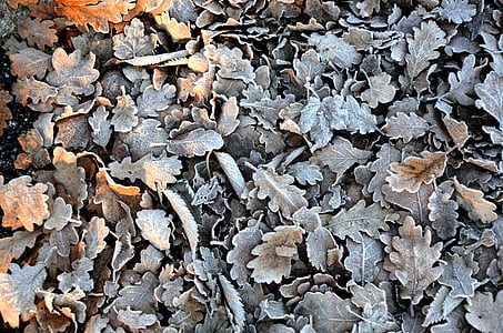 leaves, winter, cold, autumn leaves, yellow sheet, foliage, frost