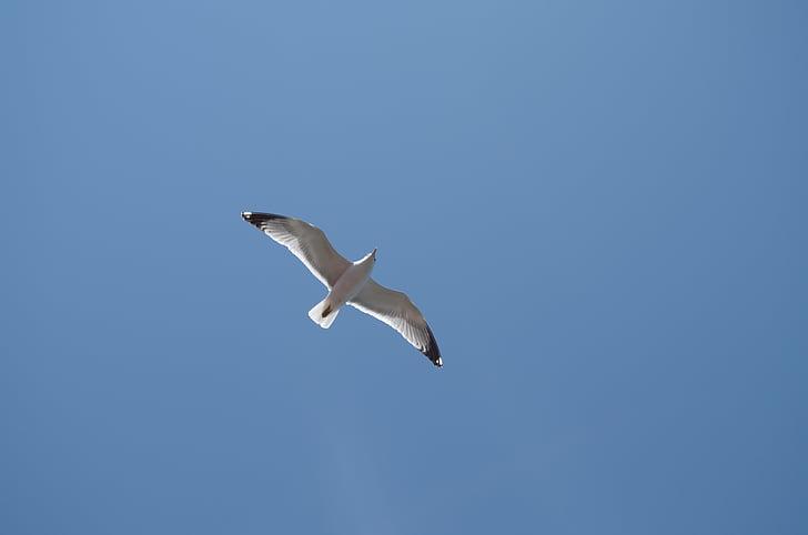 chim mòng biển, bầu trời xanh, bầu trời tươi sáng