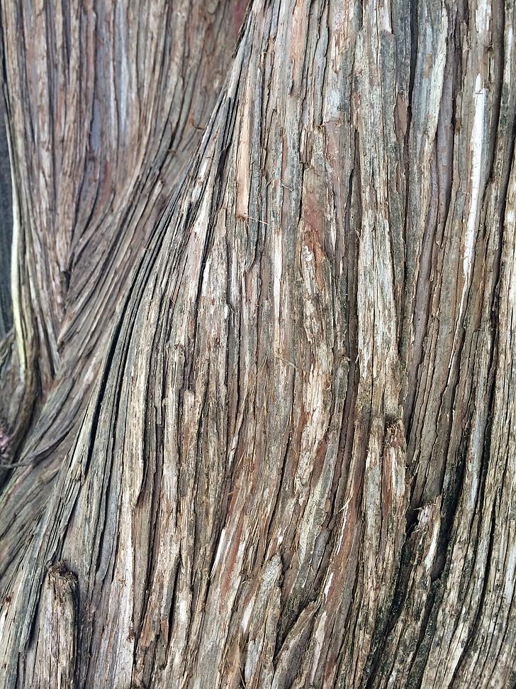 текстура, дървен материал, естествени, кора, природата, дърво