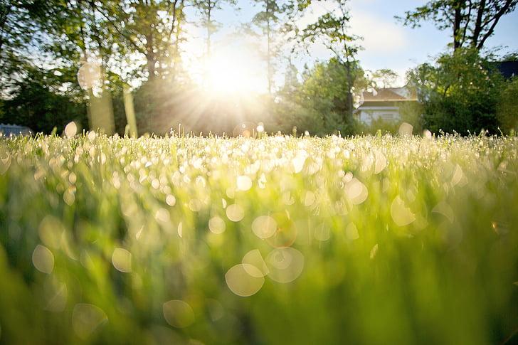 草地上的露水, 清晨露水, 早上, 自然, 草, 露水, 夏季